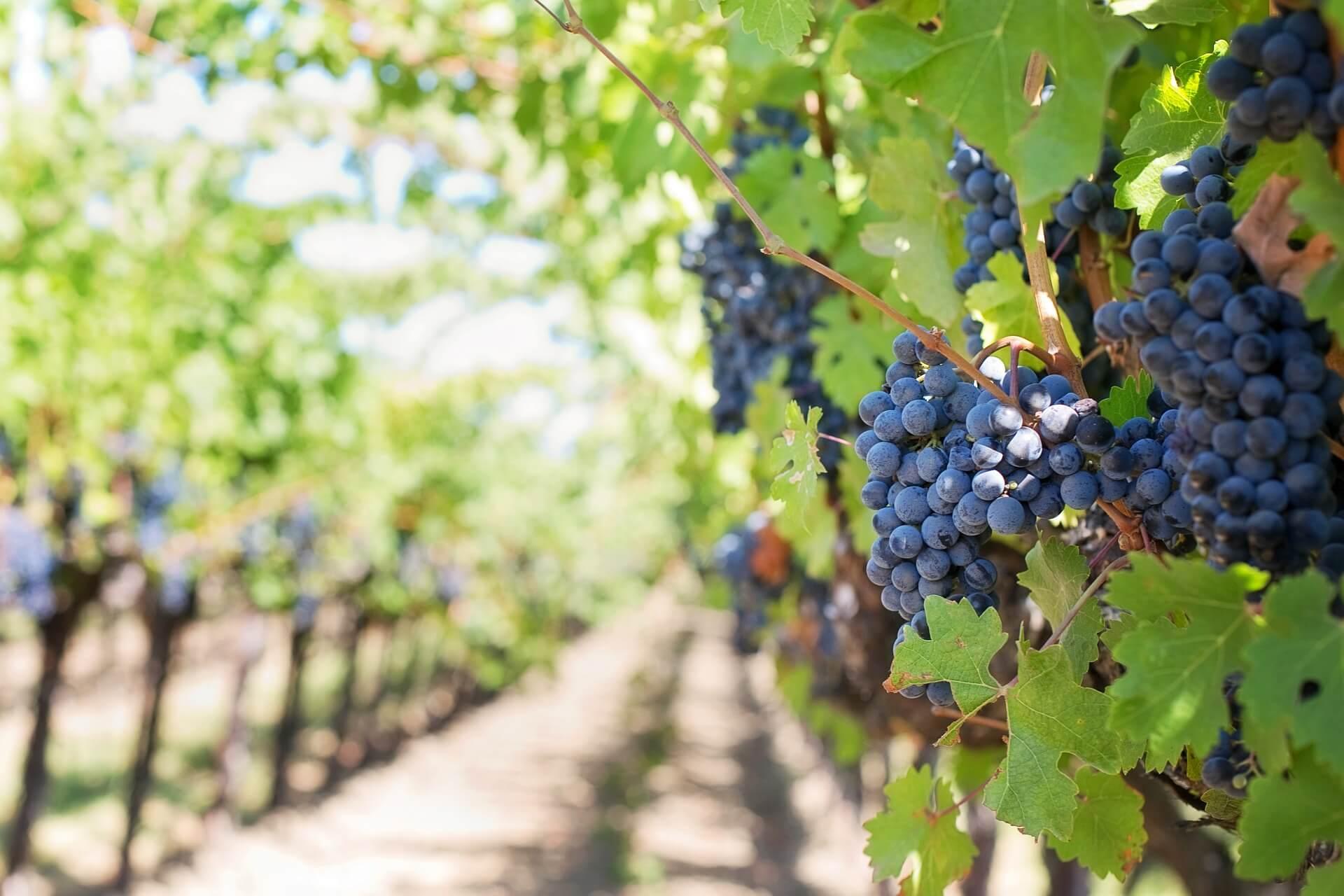 ICYMI: ShipCompliant by Sovos Wine Summit 2019